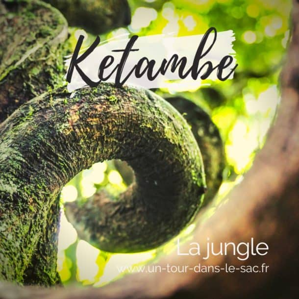 La jungle de Ketambe, Sumatra
