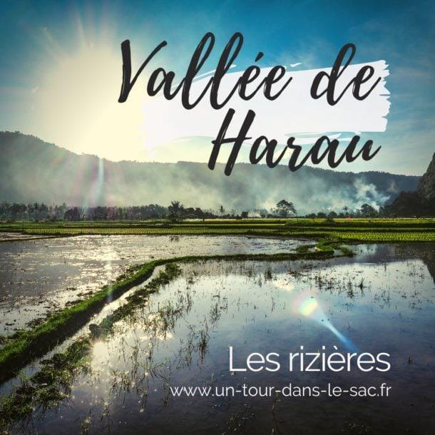 Vallée d'Harau à Sumatra : Itinéraire parmi rizières et falaises