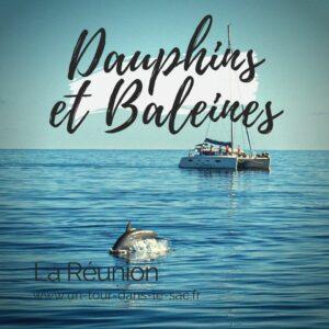 Dauphins et Baleines de la Réunion