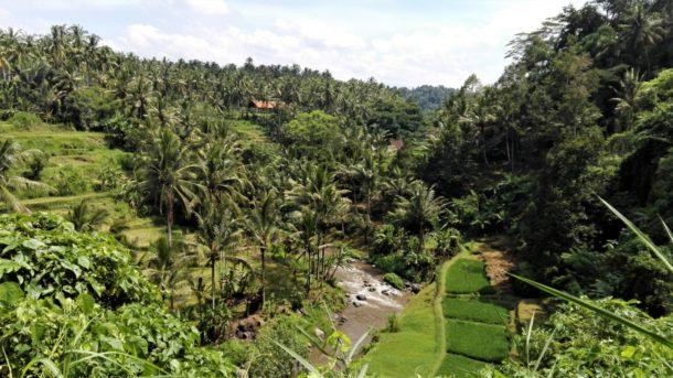 Ubud : rizières, jungle et rivière