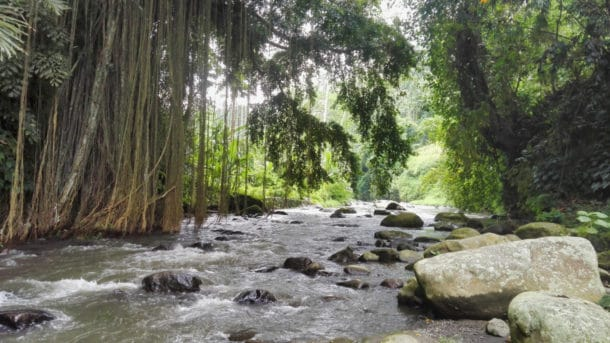 Ubud Jungle Trek