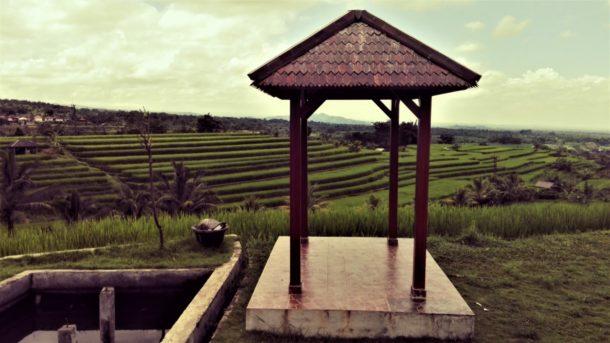 jatiluwih et ses rizières