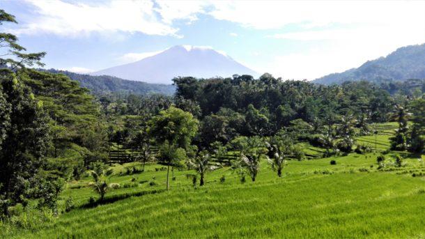 rizières et volcan de Bali