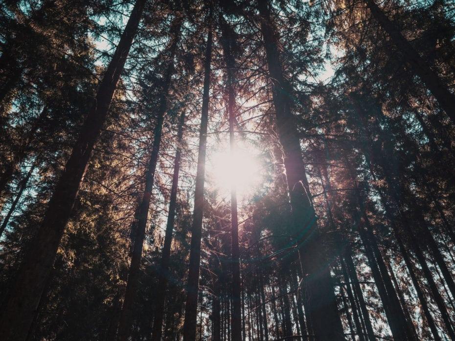 Forêt-noire soleil