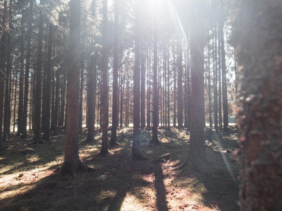 forêt-noire lumière ombre rayon
