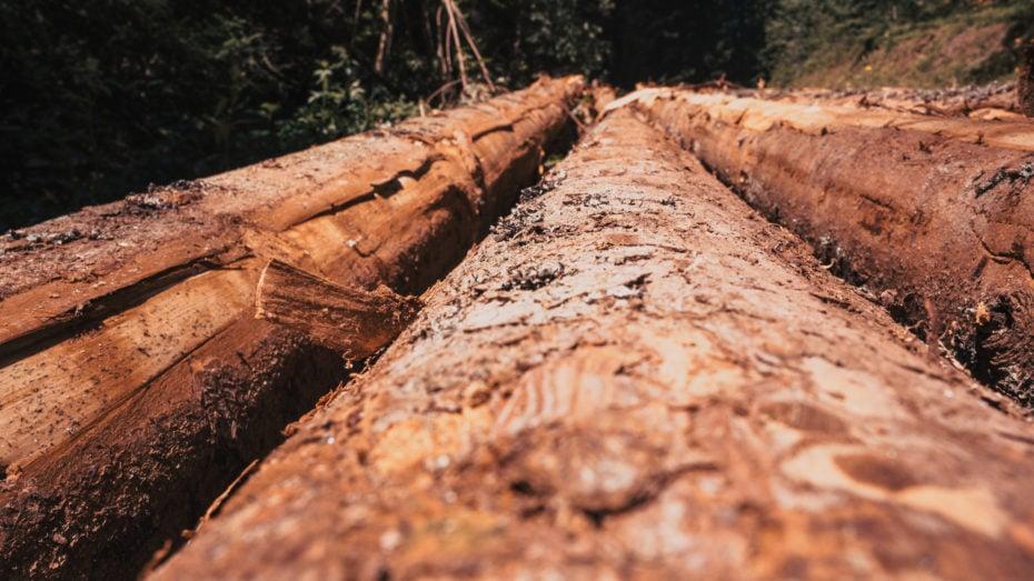troncs d'arbres Forêt-noire