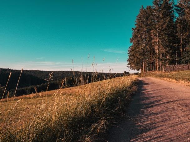 Forêt-noire chemin