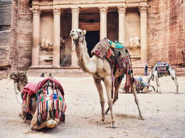 Animaux Petra