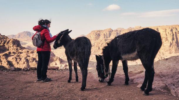 animaux Petra âne