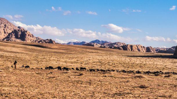 Bédouin Wadi Rum berger