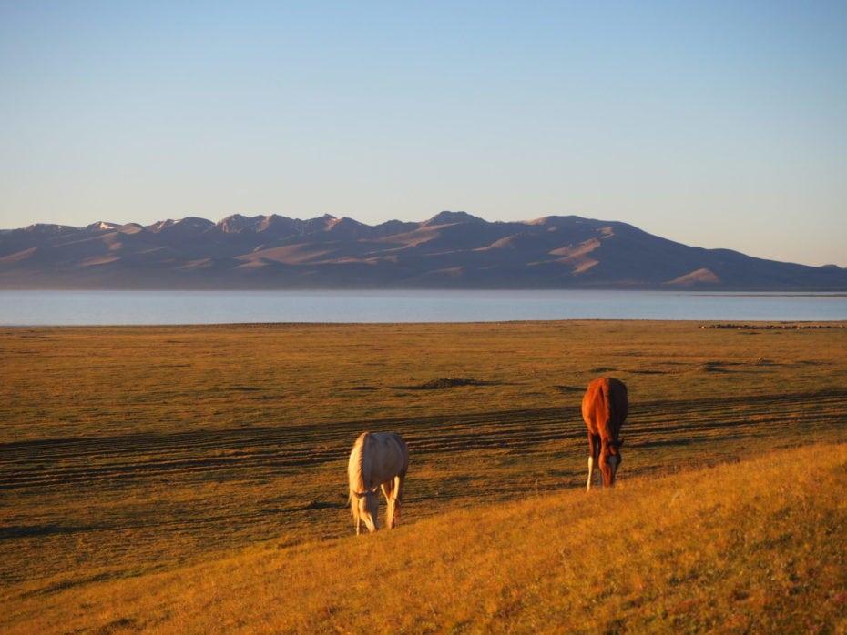 Chevaux du Kirghizistan