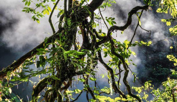 jungle et sources chaudes