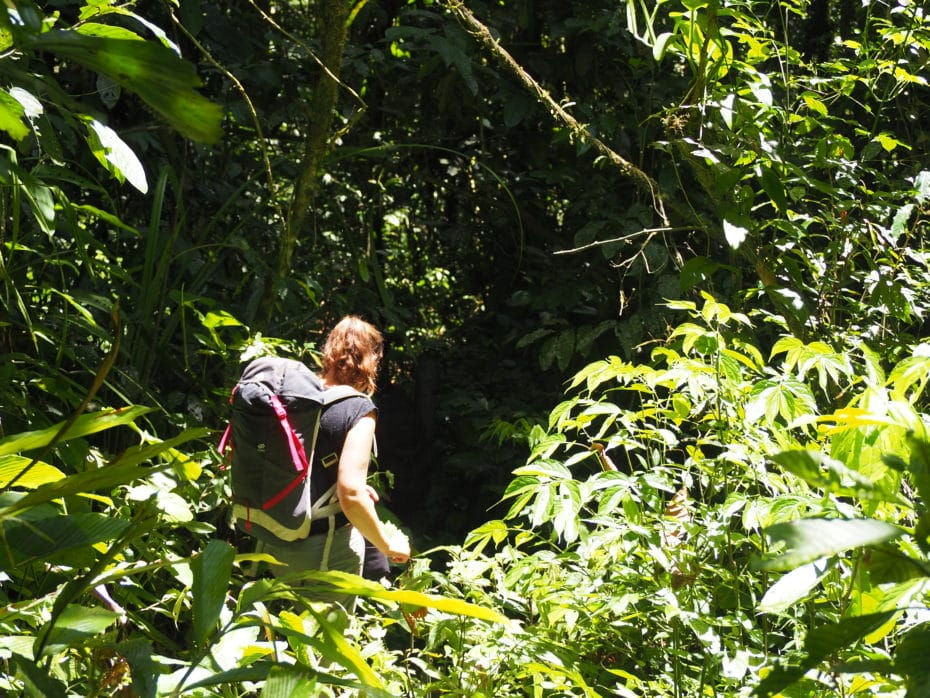 jungle Sumatra