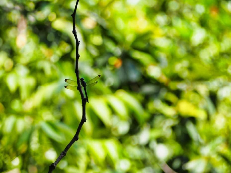 jungle indonésie insecte