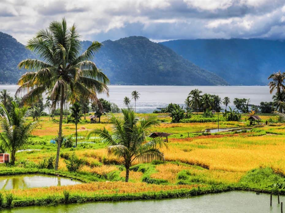 Lac Maninjau rizières