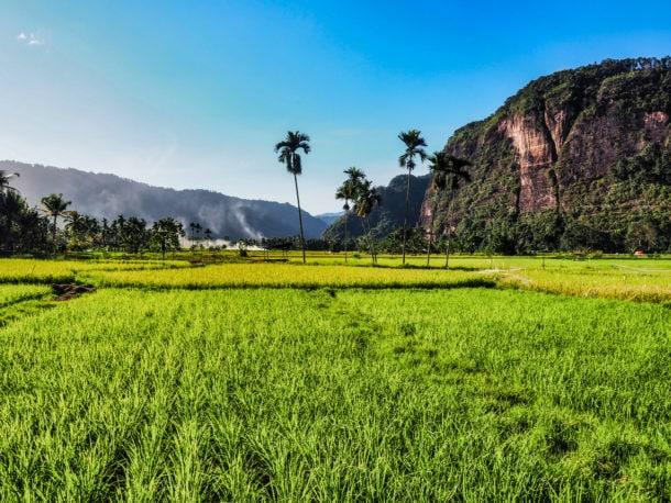 sumatra ou voir des rizières