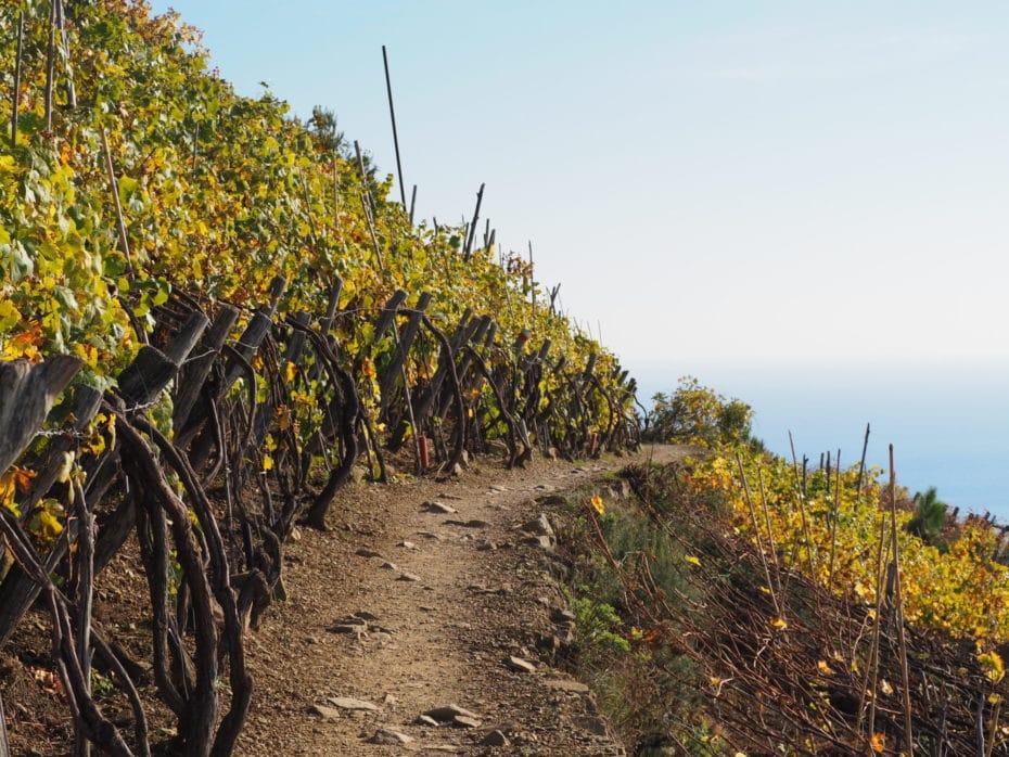 Ballade dans les vignes des Cinque Terre