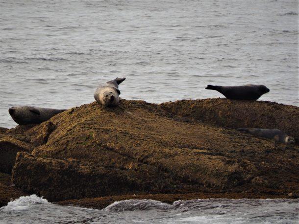 Découverte en bateau de la faune marine
